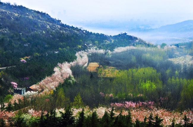 山东·滨州·樱花山风景区